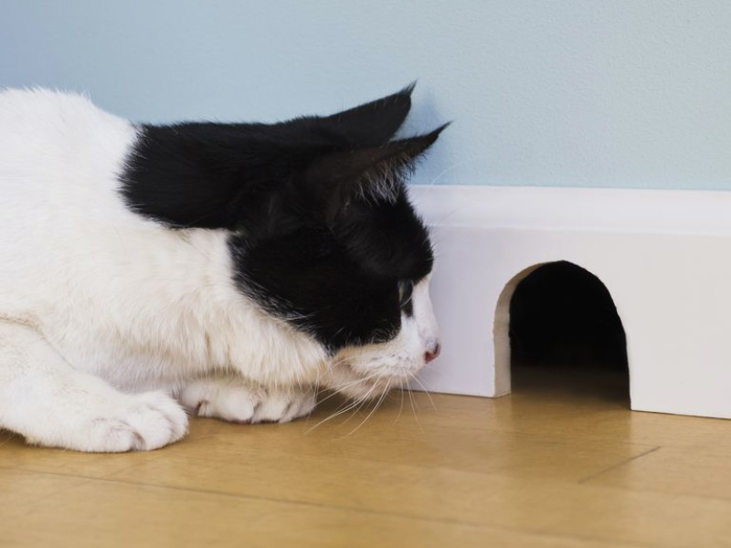 How To Deal With Mice Problems In Your Home