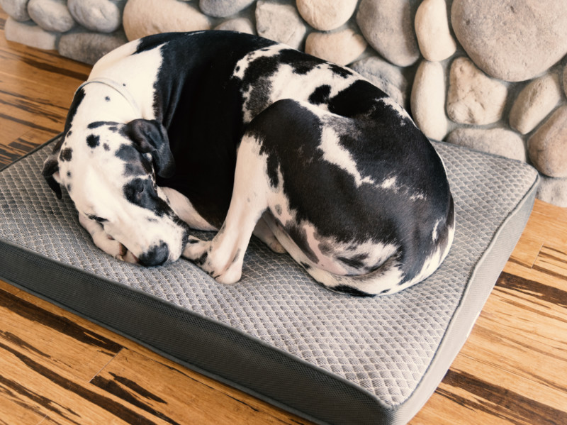 Which Is The Best Flooring For Dogs and Cats?