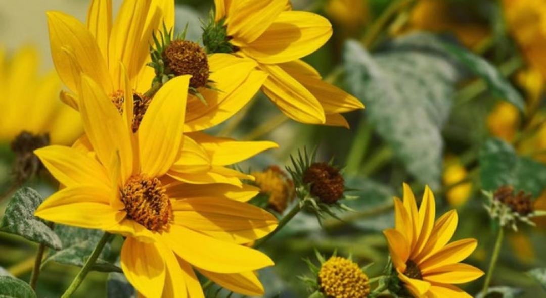 5 Native Plants That Are Easy To Grow for Beginner Gardeners