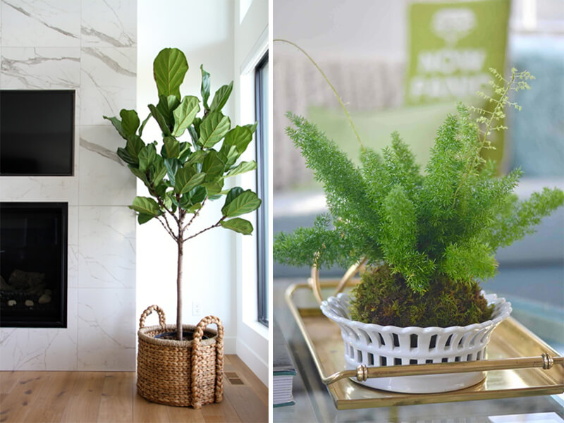 Top Houseplants to Improve Your Home's Air Quality