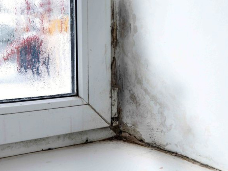 Signs of mold growth are prominent. Source: MNN