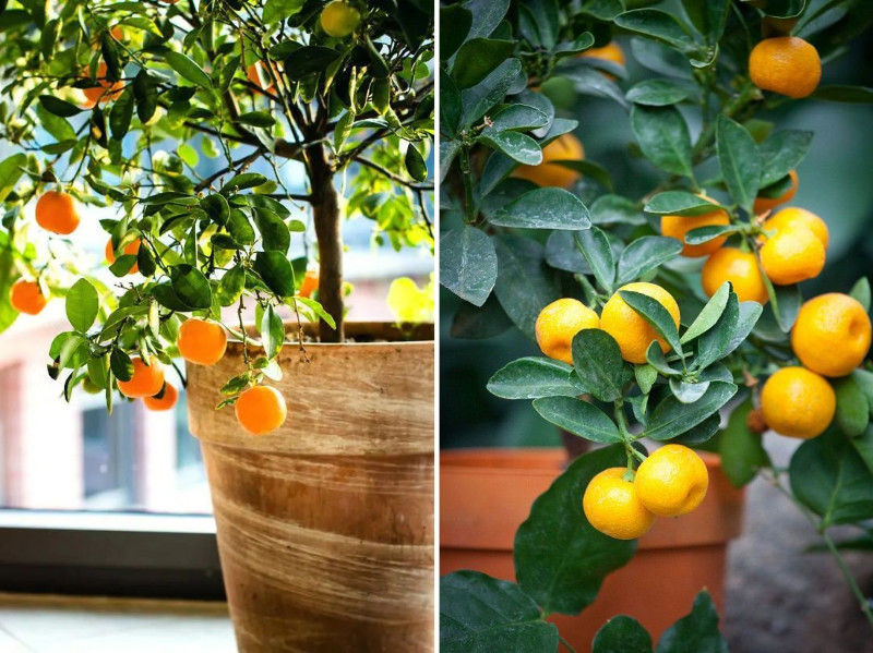 7 Tree Types That Are Easy To Grow In Containers