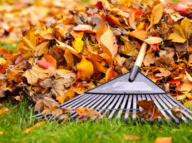 5 Important Gardening Tasks To Do Before The Holidays