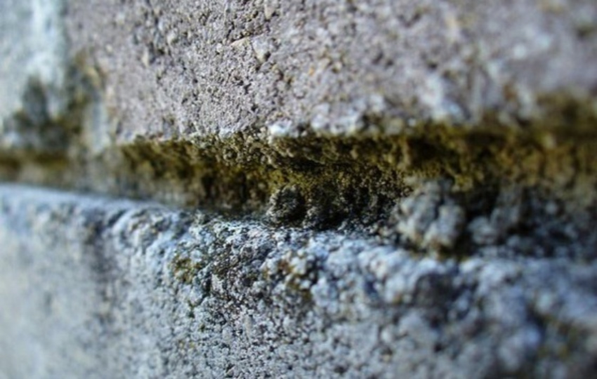 How to identify mold and mildew. Source: Bob Vila