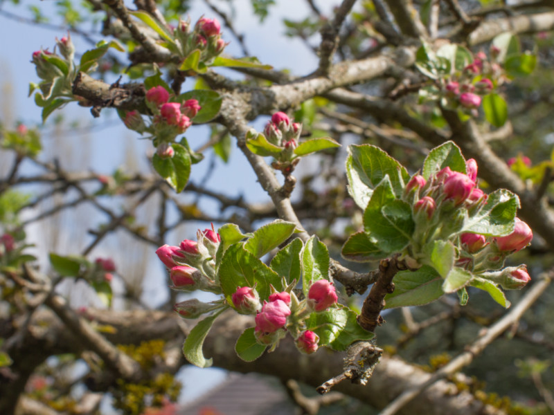 Experts Share Their Top 10 Spring Tree Care Tips