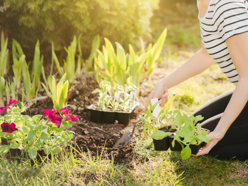 How to Help Your Garden Survive the Heat