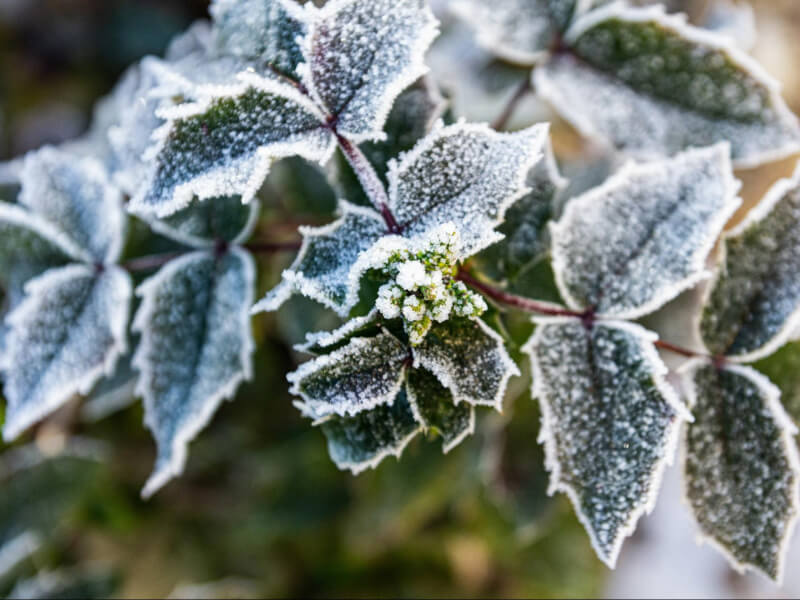 Here's What You Can Do To Save Your Plants From Frost