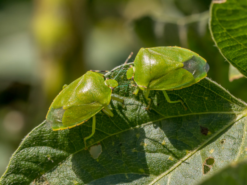 10 Prevention Tips to Keep Stink Bugs at Bay
