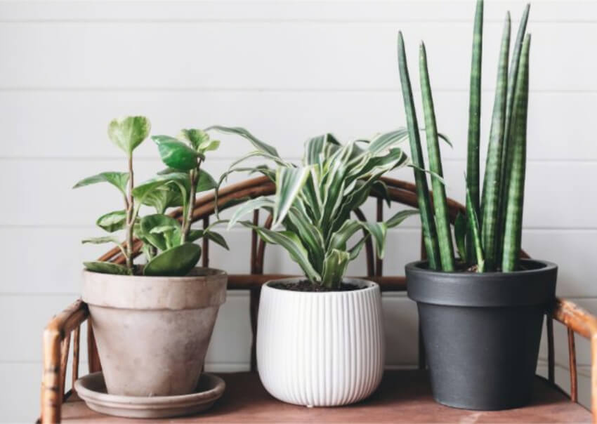 Potted plants are much easier to protect. Source: Smart Garden Guide