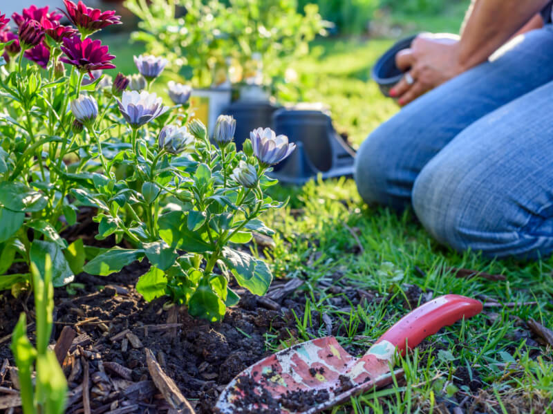 6 Ways To Keep Your Garden Low-Maintenance