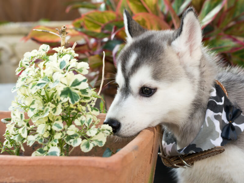Avoid These 12 Dangerous Plants To Keep Your Pets Safe