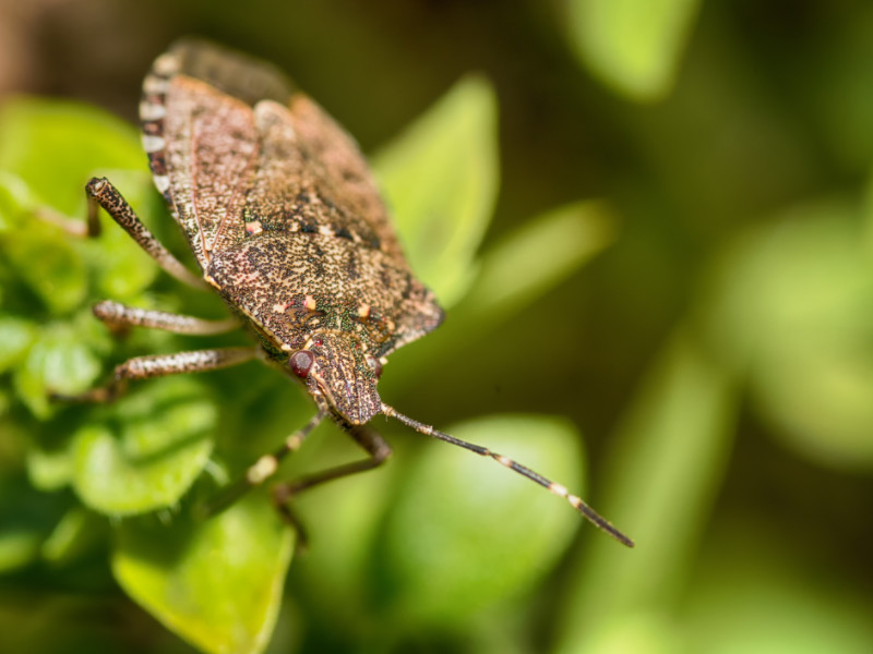 7 Most Common Fall Bugs Around Your Home