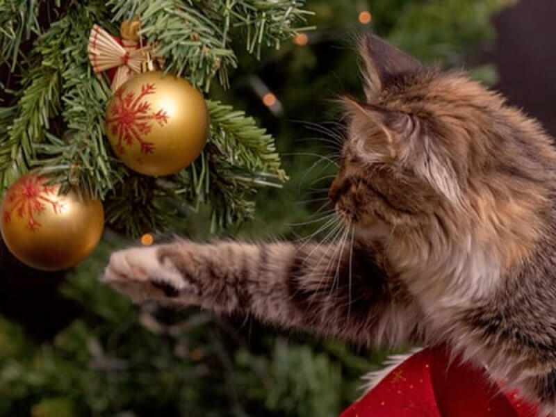 8 Easy Ways To Make Your Christmas Tree Pet-Safe and Child-Friendly