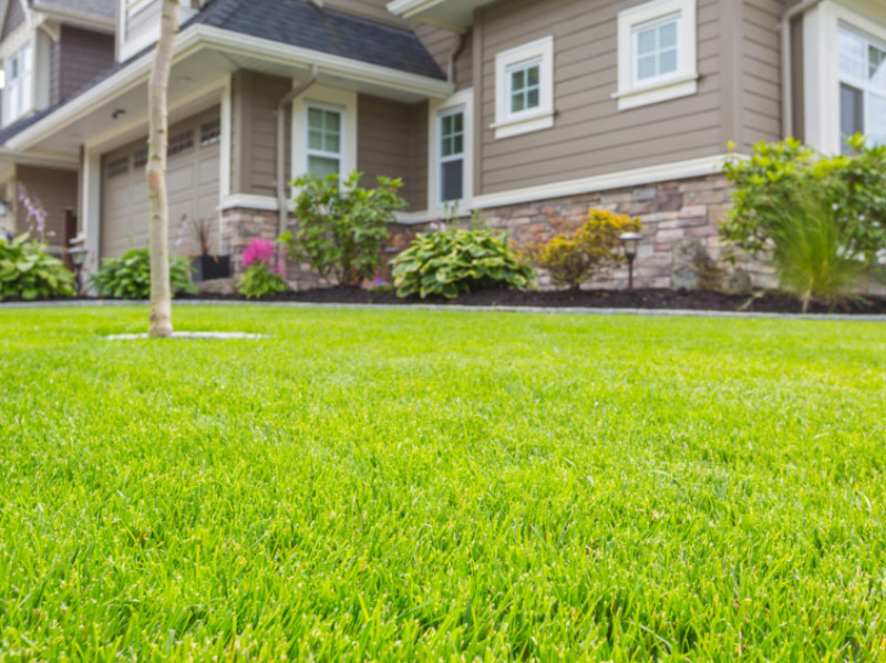 How Lawn Rolling Can Fix Your Bumpy Yard