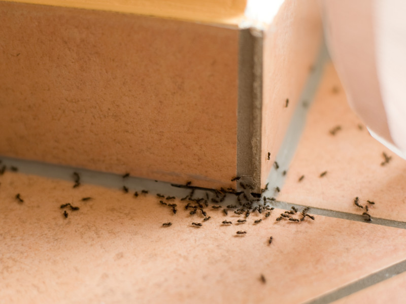 7 Natural Ways To Get Rid of Ants In Your Home