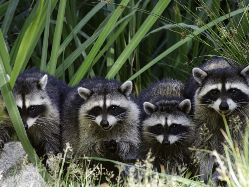 How To Prevent Backyard Critters From Disturbing Your Home