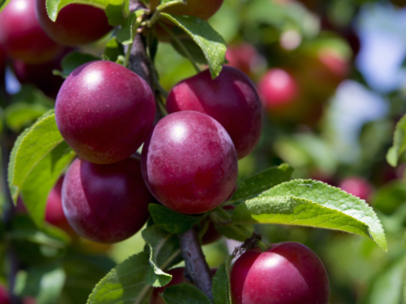 How to Grow Your Favorite Fruit Trees at Home
