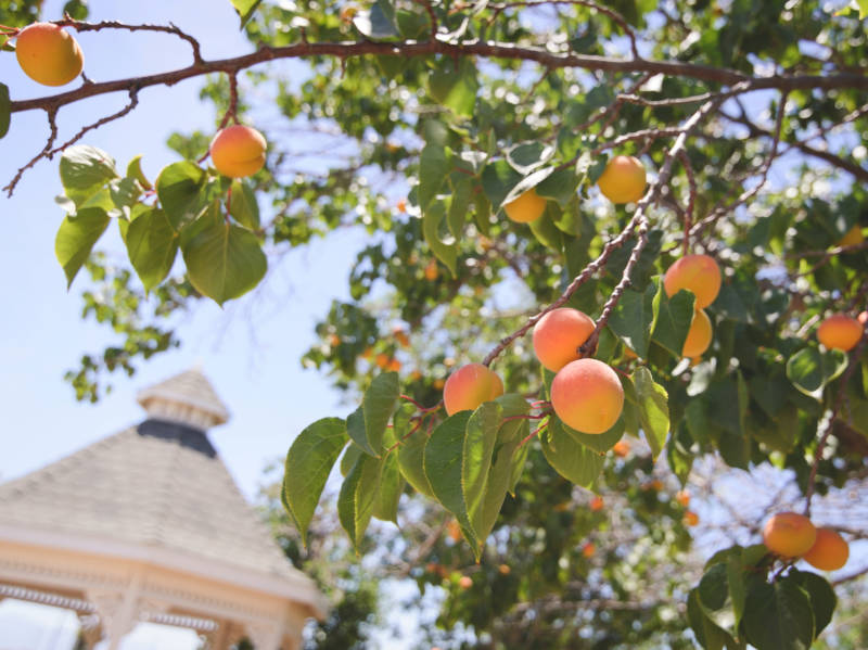 Which Fruit Trees Can You Grow in Your Yard?