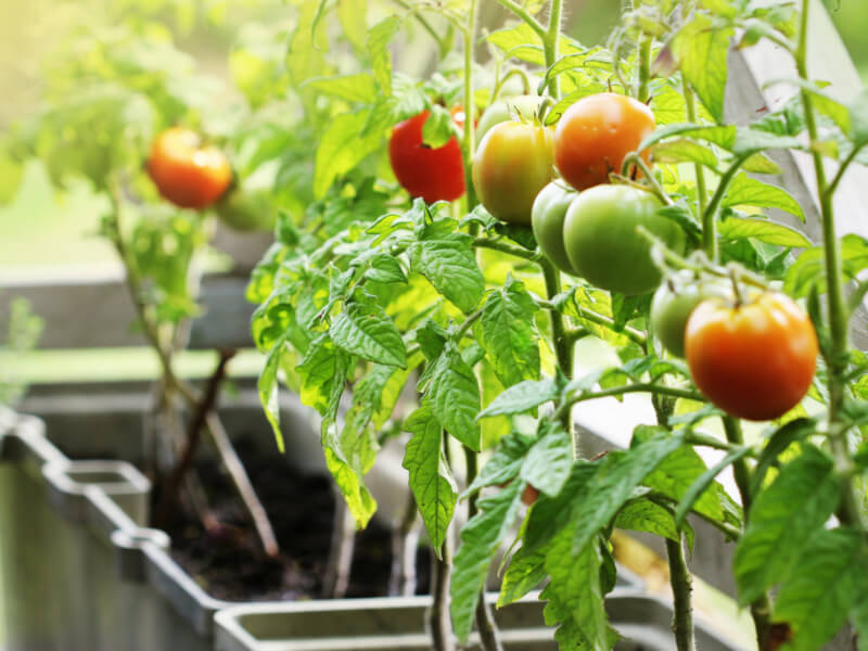 How To Start Your Own Edible Garden at Home