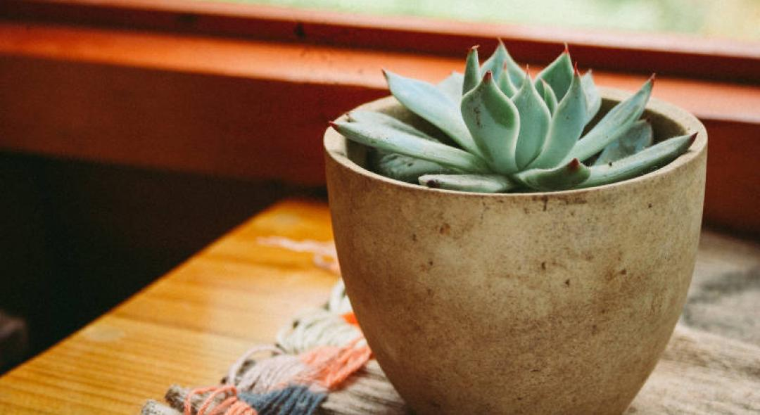 8 Things To Do If Your Plants Are Dying