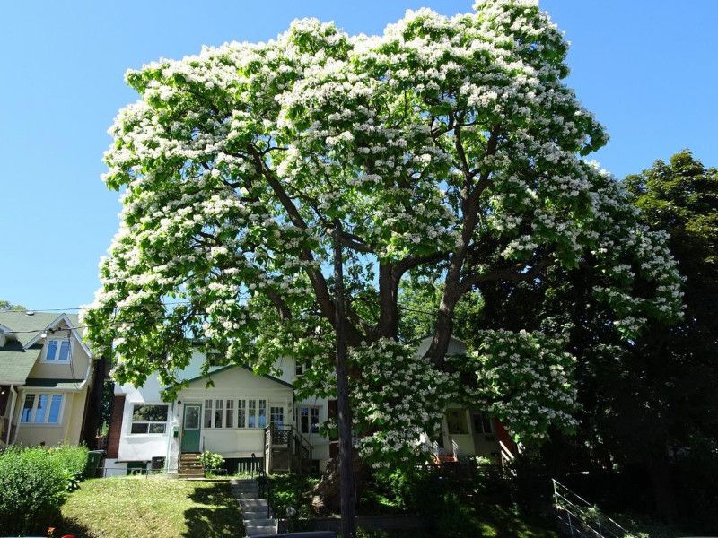 Fast Growing Shade Trees To Reduce Your Electric Bills During Summer