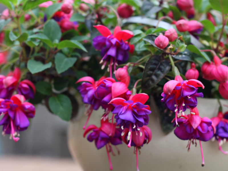 8 Shade-Loving Plants For Containers and Gardens